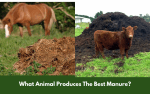 What Animal Produces The Best Manure?