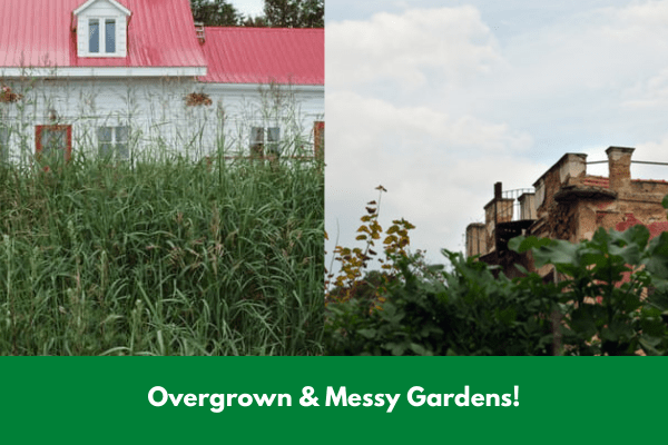 Overgrown & Messy Gardens!