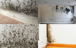 Mould And Condensation Issues - Examples