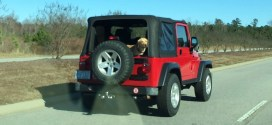 How to Enjoy a Jeep If You're a Dog