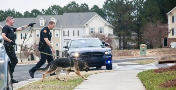 Police K-9 unit searching for bank robber.