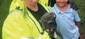 Firefighters too big, but girl just right to rescue kitten