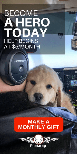 Pilot.dog Flys Rescue Dogs