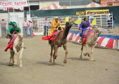 WGAS Motorsports Camel Racing Riverside County Fair