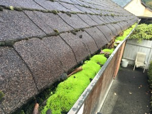 Heavy-moss-and-debris-in-gutter-BEFORE