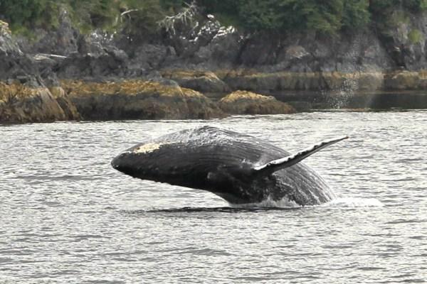 Whale-Coast-Alaska