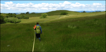 Running a line transect across a grassland at the edge of the forest