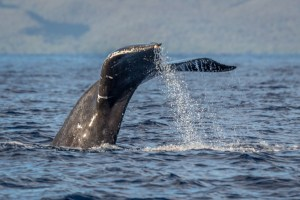 Whale Tales 2016: The Photos