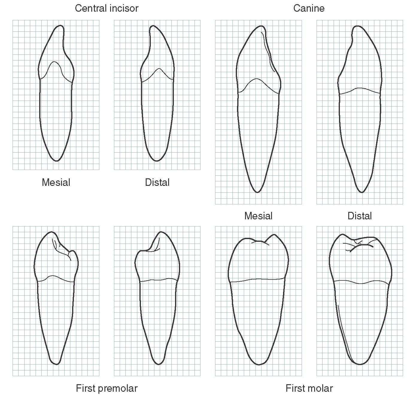 Ro Teeth Diagram