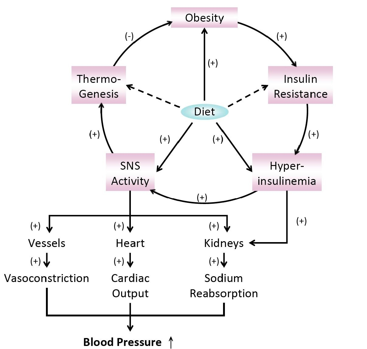 Insulin Resistance And Cardiomyopathy Metabolic And Drug