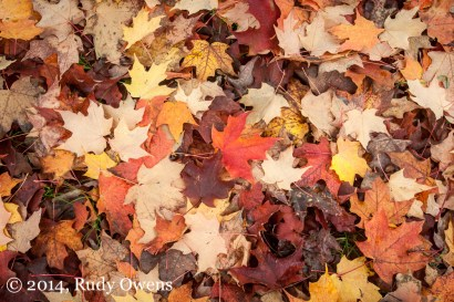 Leaves, Fall Colors