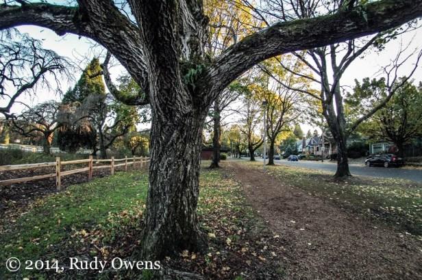 Westmoreland Park Photo