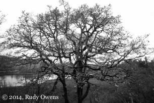 Oaks Bottom Wildlife Refuge Photograph