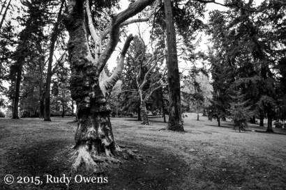 Laurelhurst Park,. Early Spring