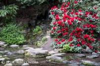 Springs at the Garden