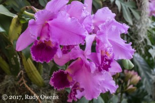 The orchid show is always popular at the Missouris Botanical Garden.