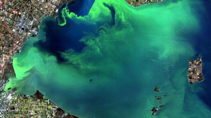 massive toxic algae blooms predicted in lake erie and gulf of mexico - Massive toxic algae blooms predicted in Lake Erie and Gulf of Mexico