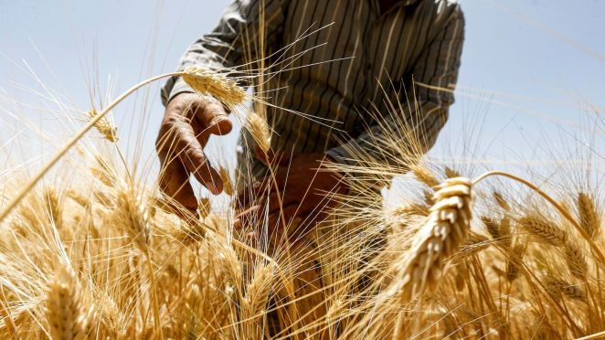 from the lab to the field agriculture seeks to adapt to a warming world - From the lab to the field, agriculture seeks to adapt to a warming world