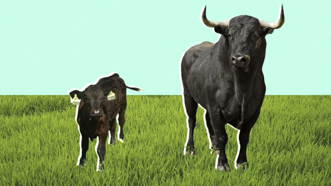 the future of beef might be a sausage fest - The future of beef might be a sausage fest