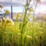 why should i use green energy sources - Why should I use Green Energy Sources?