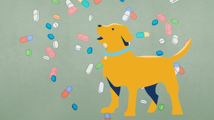 are nutritional supplements the best choice for people their pets and the planet - Are nutritional supplements the best choice for people, their pets, and the planet?