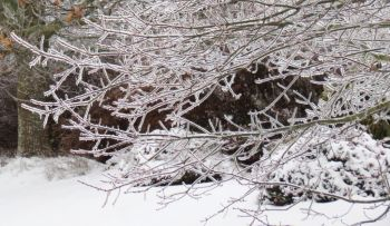 trees coated with ice 2017-02-04