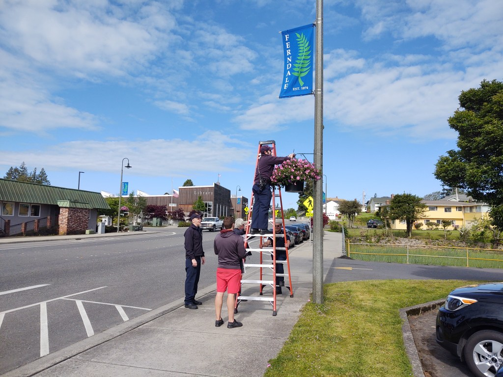 WCFD7 volunteers putting up flower baskets throughout downtown Ferndale (May 15, 2020). Photo: My Ferndale News