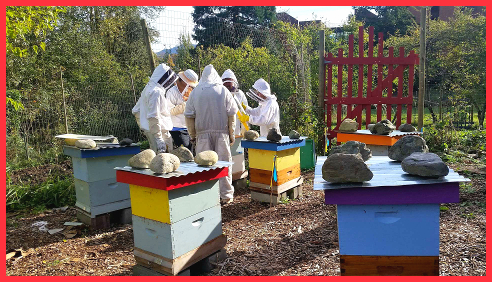 Beekeeping with Michael Jaross