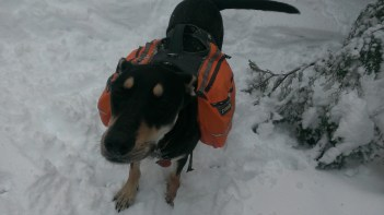 """Stella is the happiest damn pack-mule/snow-dog. """"Hey, guys! Let's go faster!"""""""