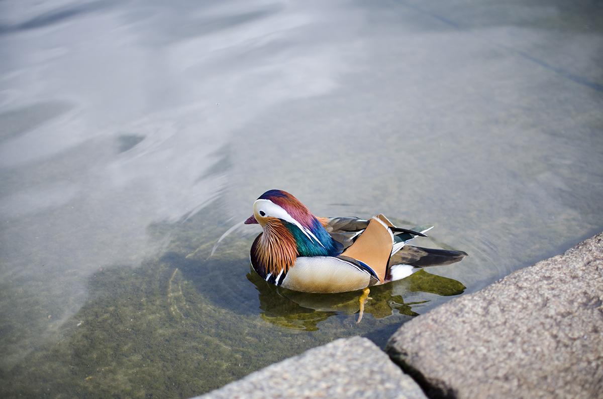Un Week-end à Londres - Kensington Gardens + Hyde Park - Whatever Works
