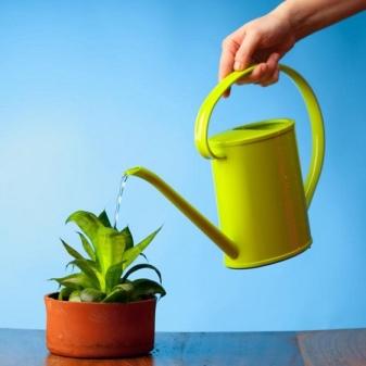 Неприхотливые комнатные растения фото и название. 25 ...