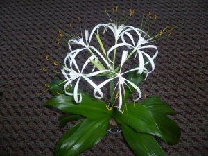 Луковичные комнатные цветы. Описание и названия луковичных ...