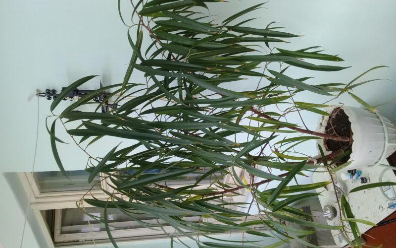 Растение с узкими длинными листьями | What Flower?