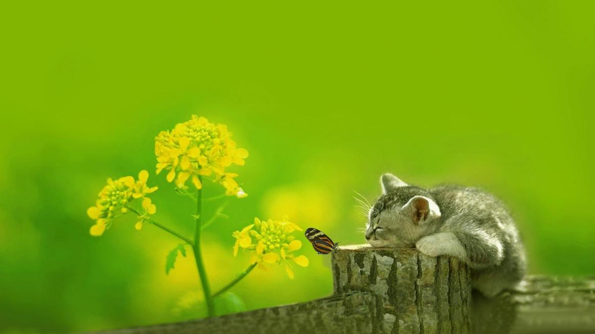 cute-cat-watching-butterfly
