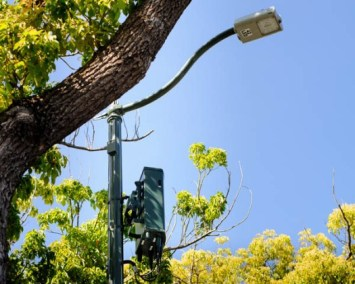 Small Cell Next to Trees