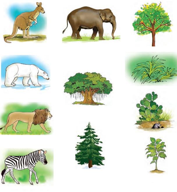The biosphere - kangaru, ashwal, siha, zebra, tree, zudup, mouse, small tree, hatti, vatruksha, big tree