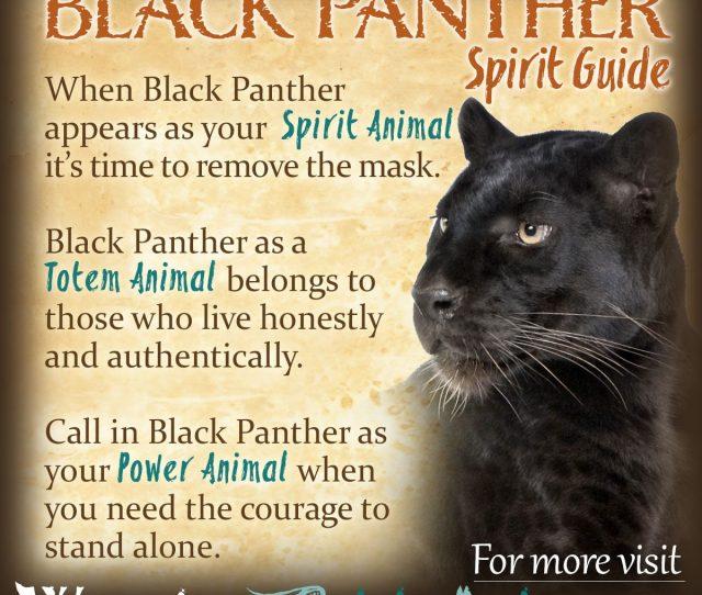 Black Panther Spirit Totem Power Animal Symbolism Meaning X