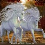 Unicorn Symbolism Meaning Unicorn Spirit Totem Power Animal