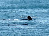 frolickingwhales1sep