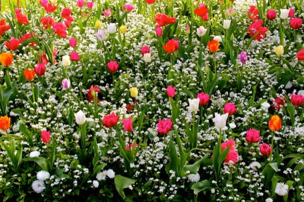 bruges flowers
