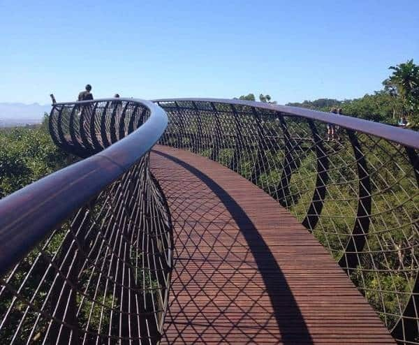 Kirstenbosch Gardens tree canopy walkway