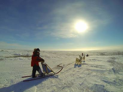 Patricia with her team of dogs, facing the open Arctic tundra.