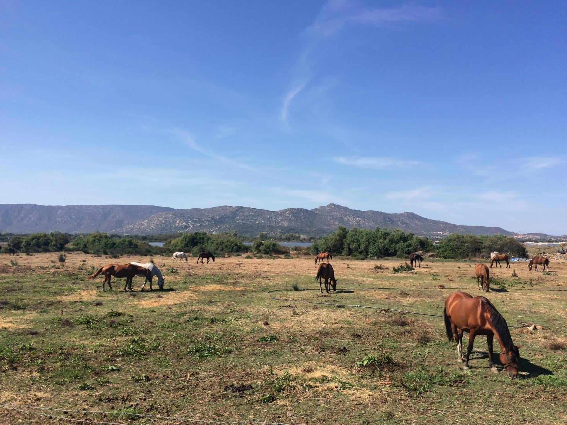 Horse trail in Olbia