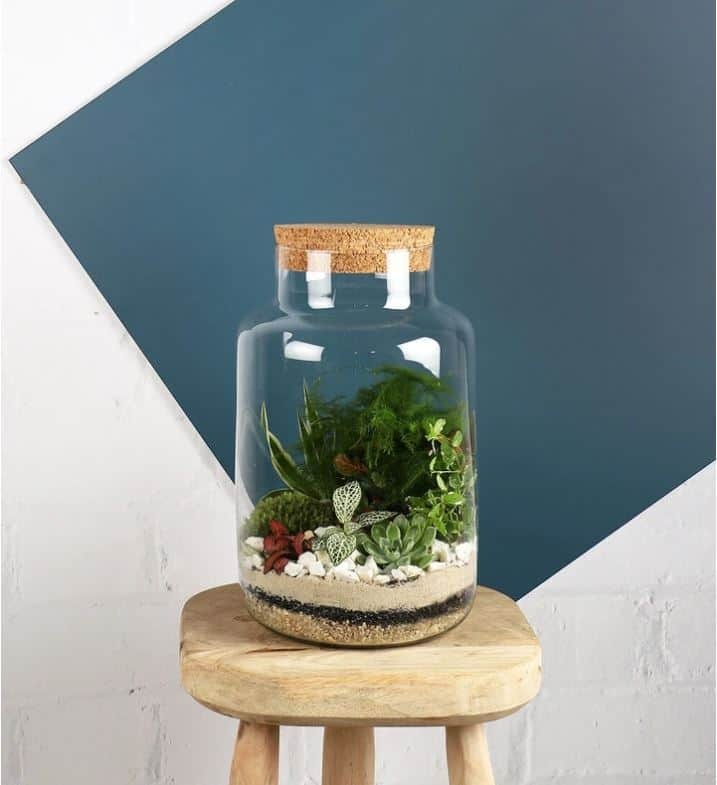 Terrarium kit from Beards and Daisies