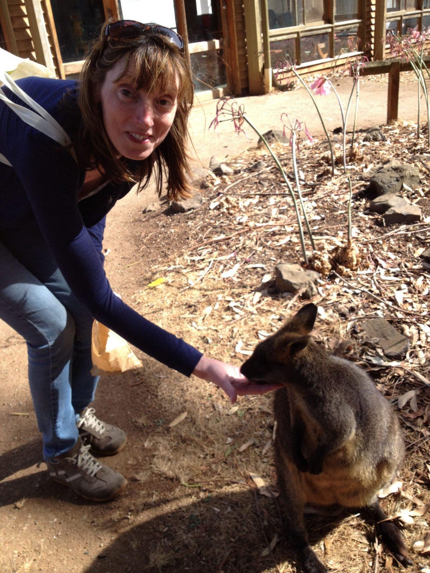 Feeding the wallabies at Phillip Island Wildlife Park