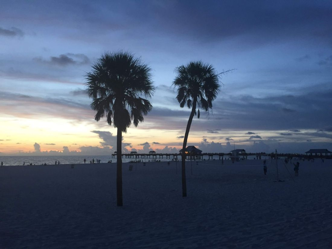 Palm trees at sunset