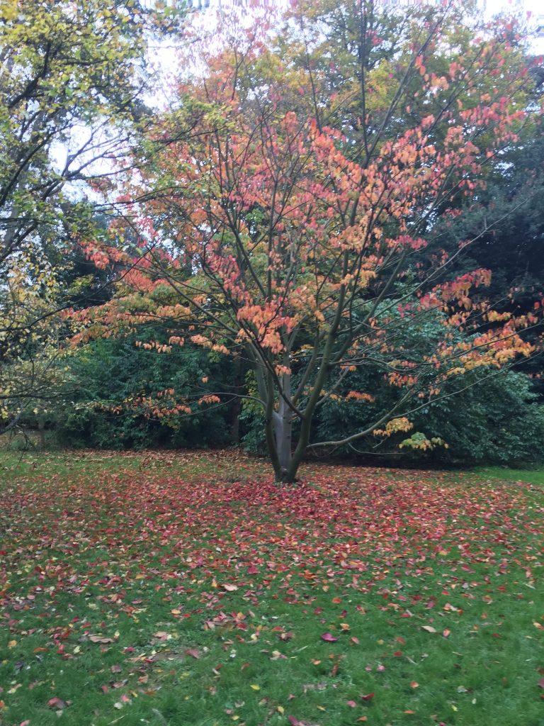 Trees in autumn at the arboretum