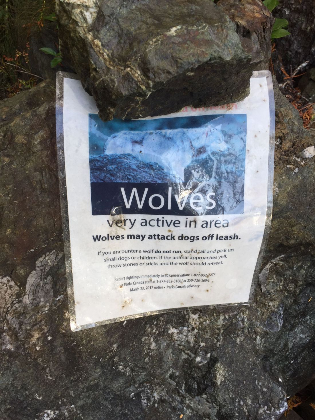 Wolves warning on the Wild Pacific Trail