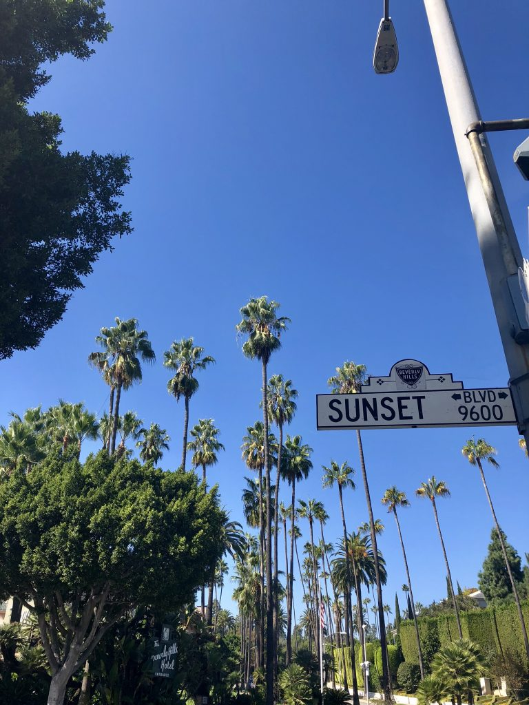 The palm trees of Sunset Boulevard, LA