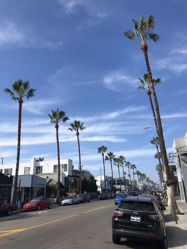 Palm trees along Abbot Kinney Boulevard, Venice